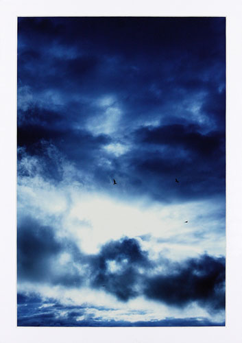 Ville Kujala | Linnut ja taivas 1