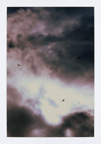 Ville Kujala | Linnut ja taivas 2