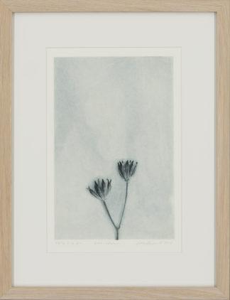 Eeva Kirilin-Helenius | Linnunkaali, 2/5 EV
