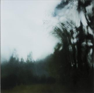 Annukka Visapää | Kuljen kohti metsän olemusta