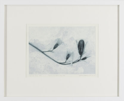 Eeva Kirilin-Helenius | Talvipuutarhasta 7/10 EV