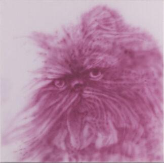 Sami Leutola | Pink kitten